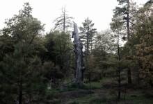 LAGUNA TREE TOUR